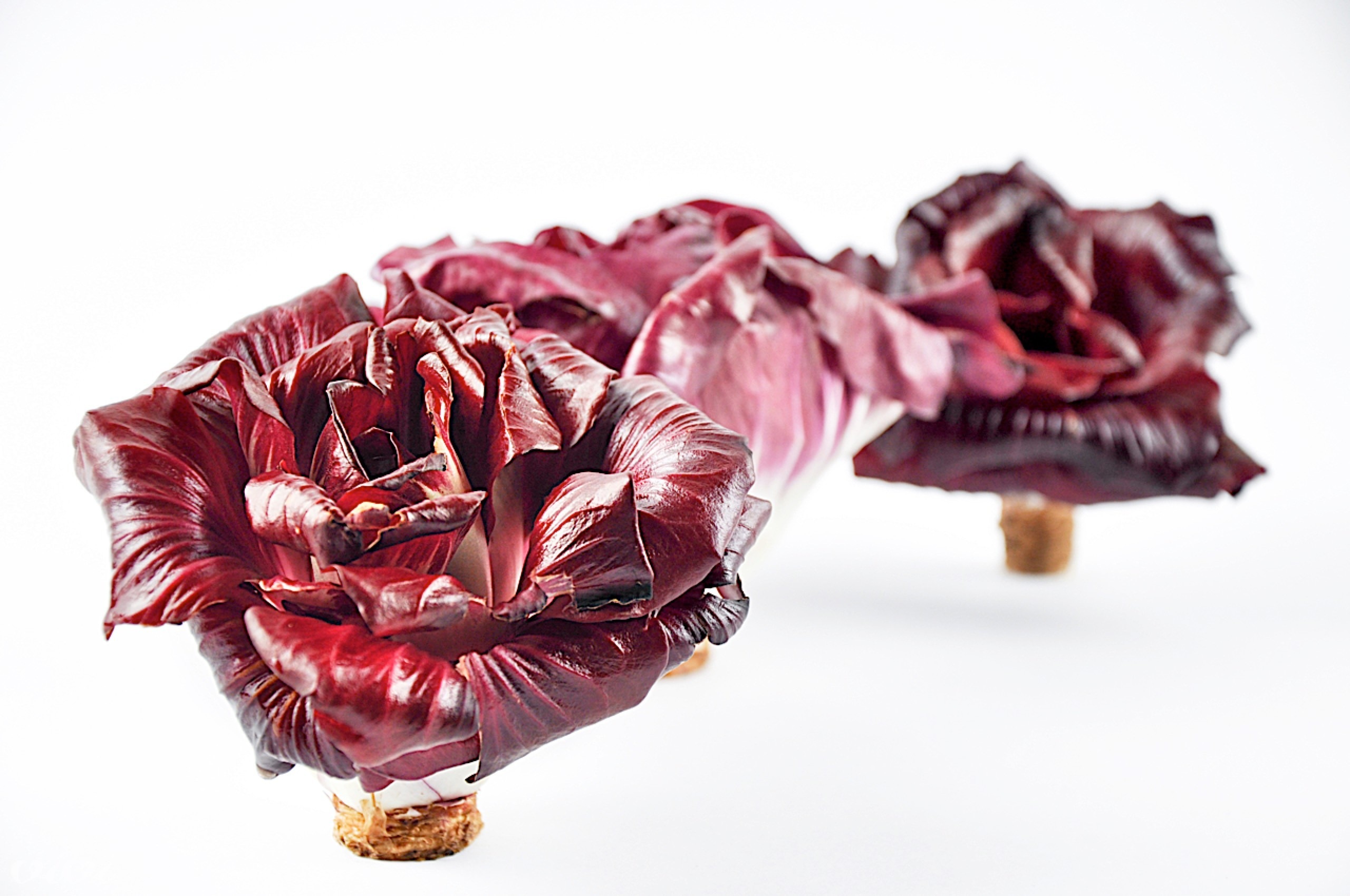 solkanski radic goriska roza4