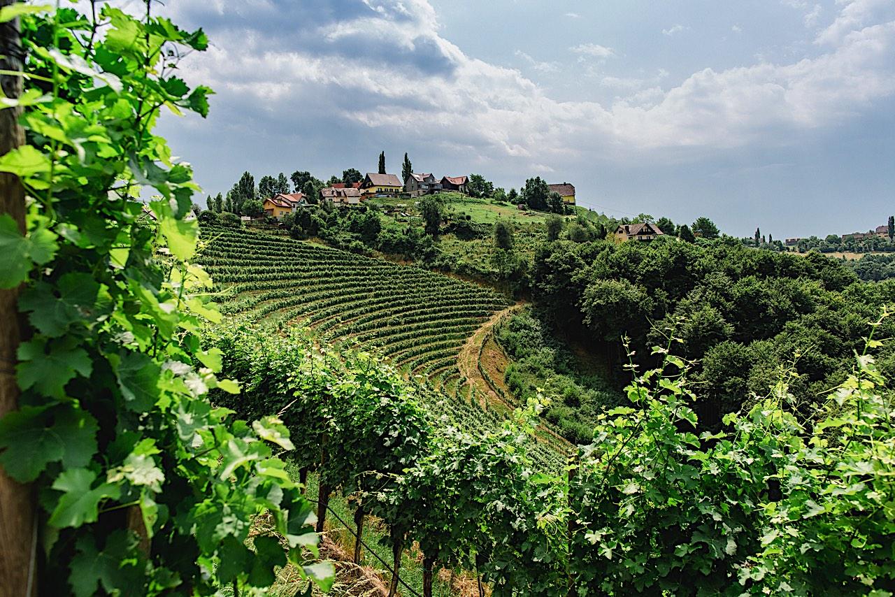 kappel vinograd