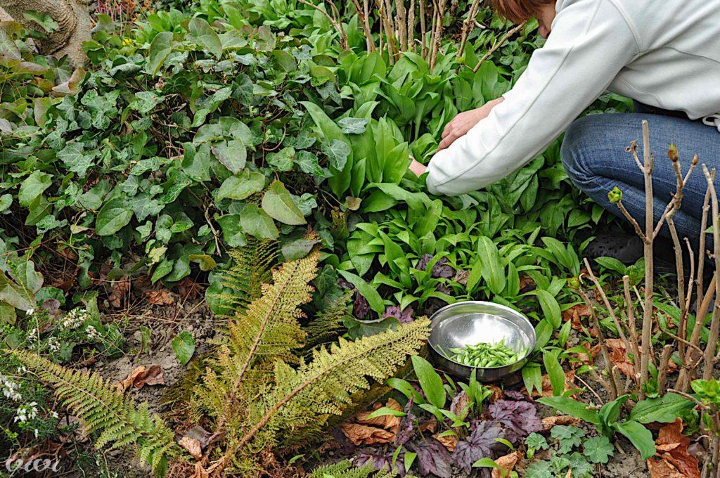 cemaz na vrtu nabiranje cvetov 2