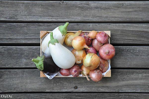 poletna zelenjava z vrta silvo 1