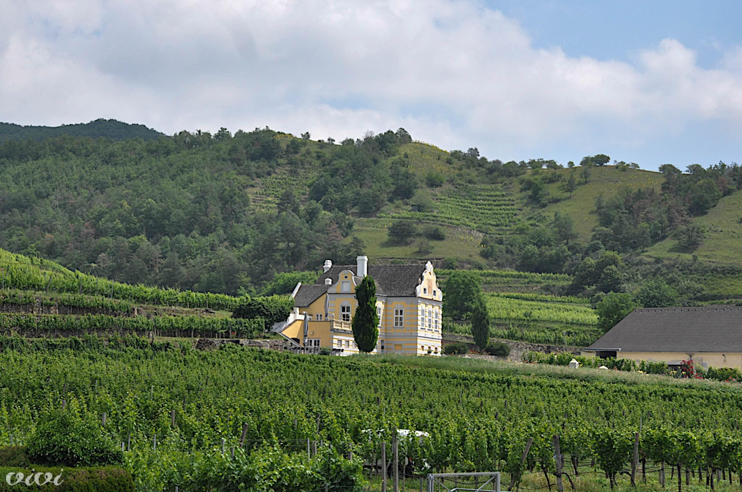 wachau vinograd posestvo 1